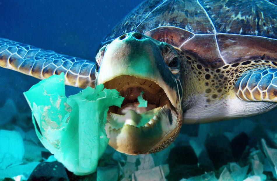 Plastic rubbish smells good to turtles