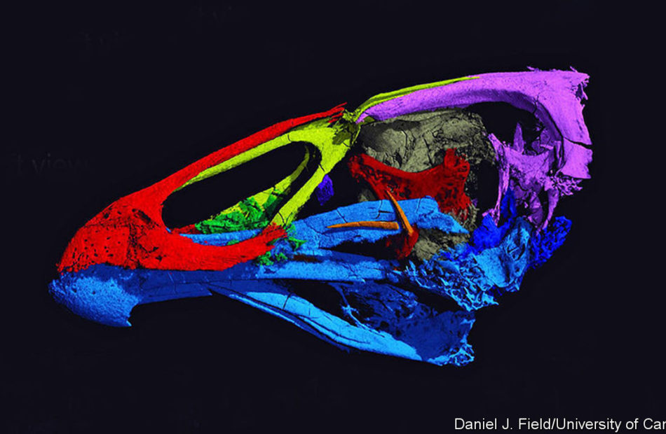 Another ancient bird skull is another bit of avian history