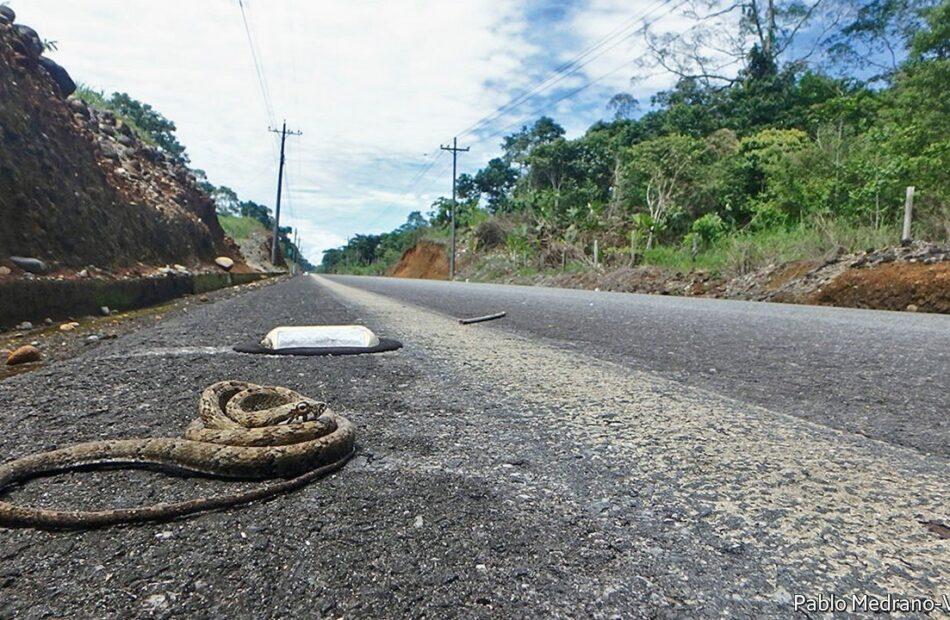 Roadkill provide a novel way to sample an area's animals