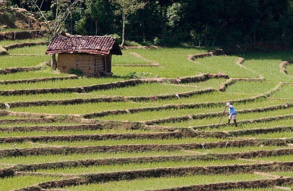 A rush to farm organically has plunged Sri Lanka's economy into crisis